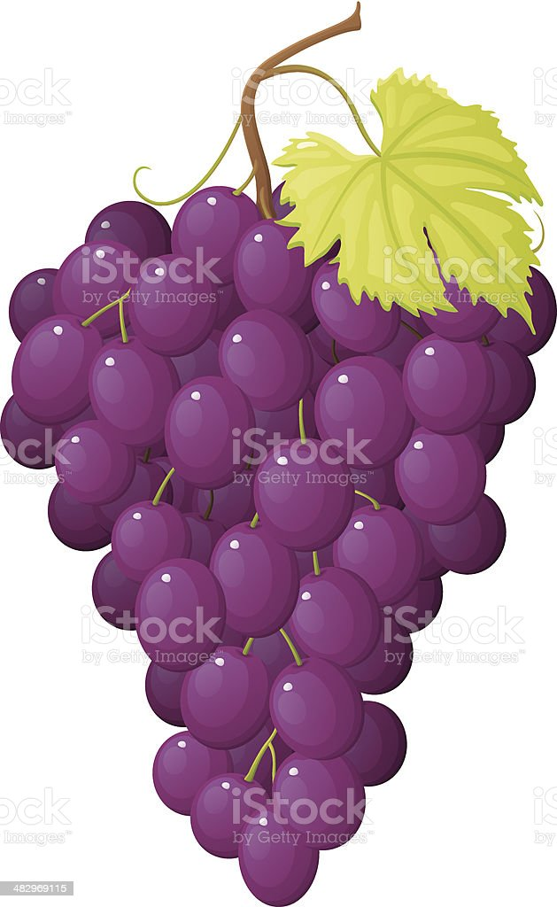 Grapes vector art illustration