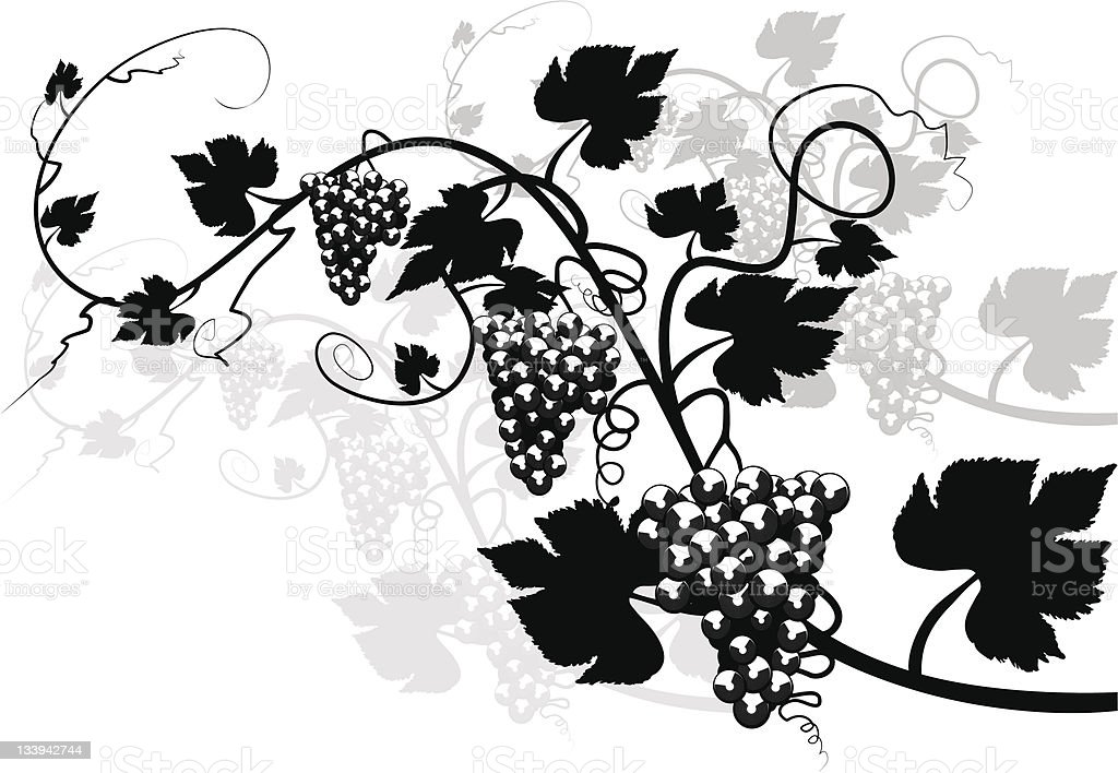 Grapevine and Vine royalty-free stock vector art