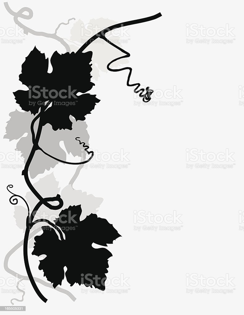Grapevine Design vector art illustration