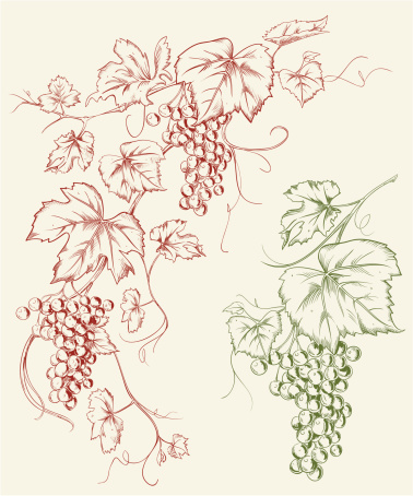 Grapevine Grape Line Art Drawing