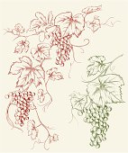 Hand-drawn vector grapevine corner and single grape with leaves in pen & ink style.
