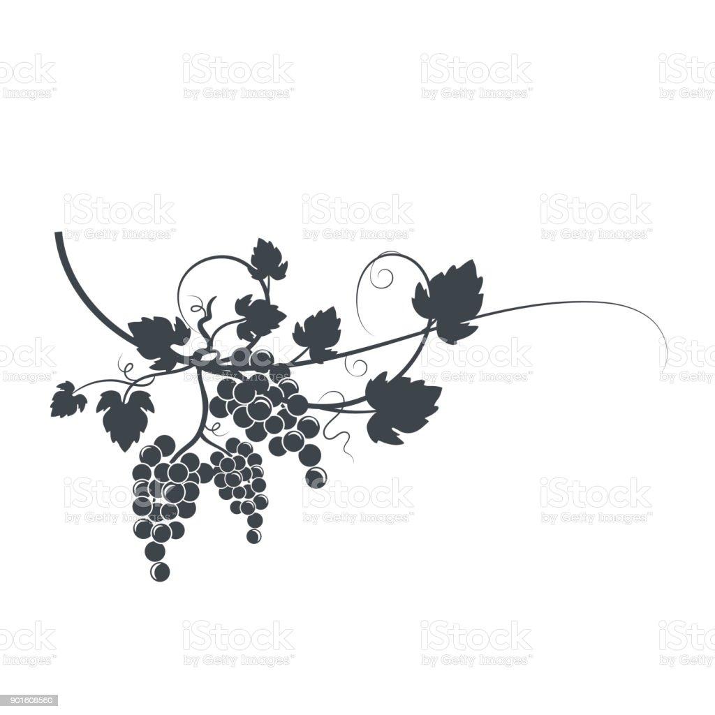 Grapevine Silhouette vector art illustration