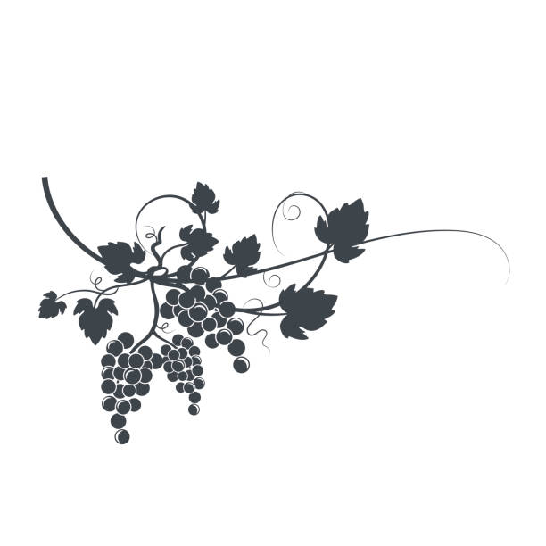 grapevine silhouette - vine stock illustrations, clip art, cartoons, & icons
