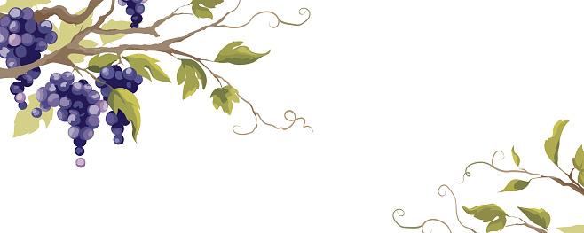 Grapevine - vector background.