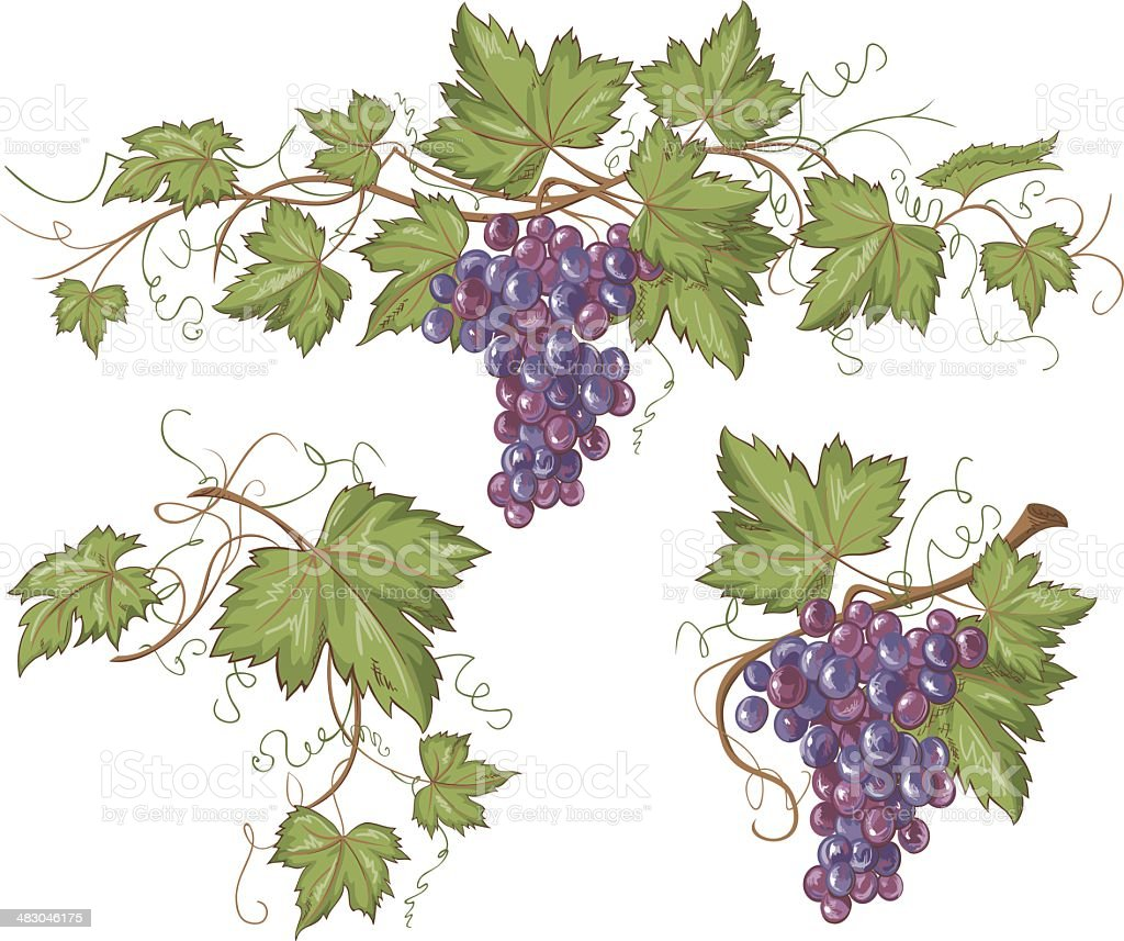 Hand drawn horizontal vector grapevine border and design elements in...