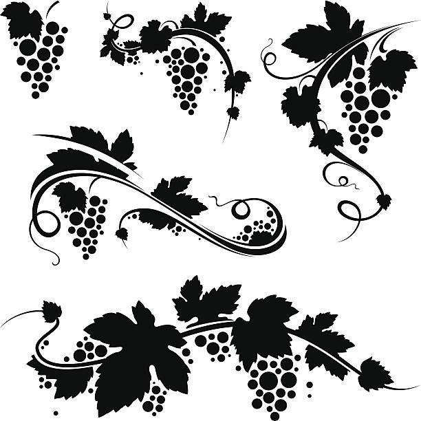 bildbanksillustrationer, clip art samt tecknat material och ikoner med grapevine/wine symbols - vindruva
