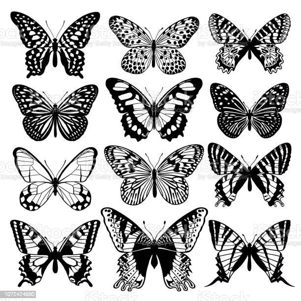 Graphic abstract butterflies set black and white vector id1072424650?b=1&k=6&m=1072424650&s=612x612&h=kyjnejr7t5qn7njqirvzzi lsa0xloaguemkerzb4w4=