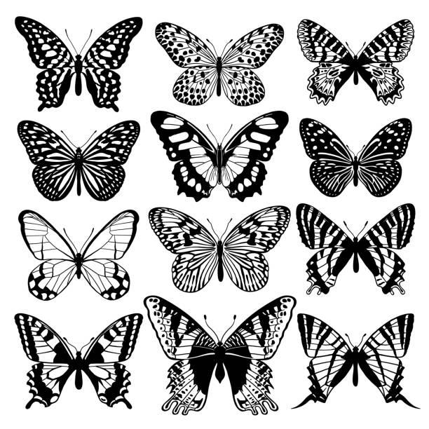 ilustrações, clipart, desenhos animados e ícones de resumo gráfico de borboletas conjunto. preto e branco - borboleta