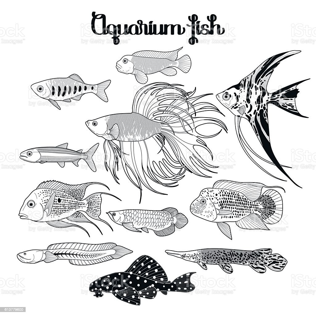 Graphic Aquarium Fish Set Stock Vector Art More Images Of Adult