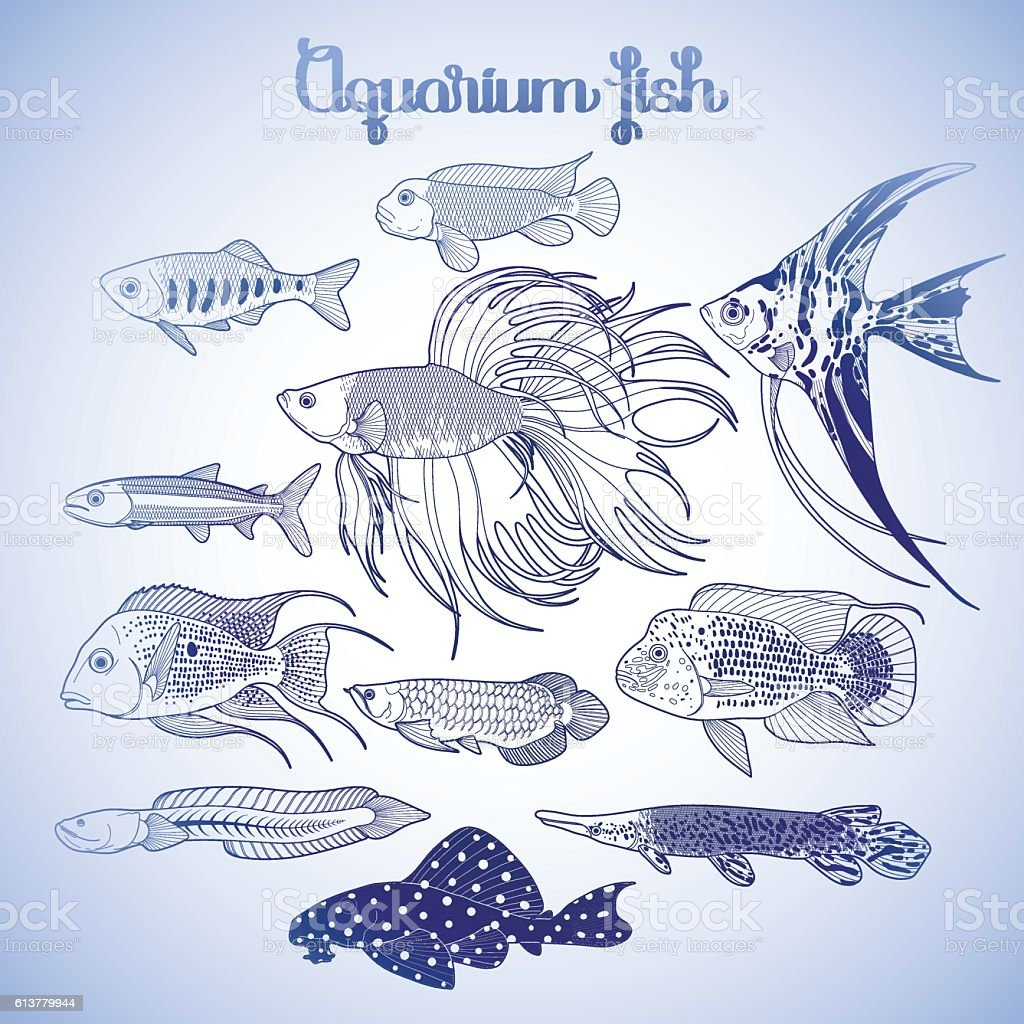 Graphic Aquarium Fish Set Stock Vector Art More Images Of Animal