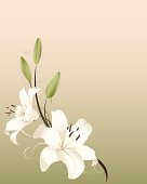 Graphic art of white spring lilies on pastel background