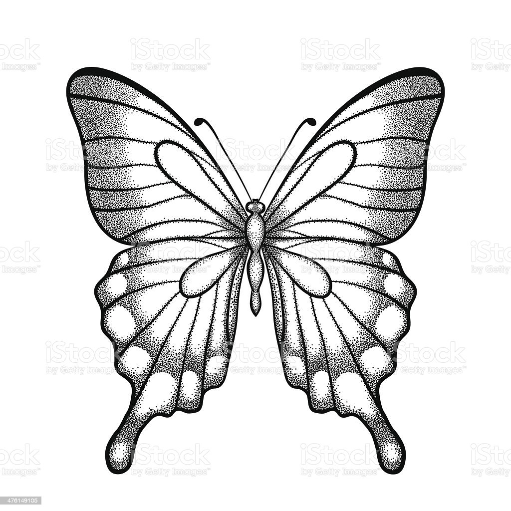 Contour Line Drawing Butterfly : Graphic black and white butterfly handdrawn contour lines
