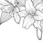 graphic black and white lilies. Decoration on a white background. Can be used to design greeting cardsMany similarities in the profile of the artist