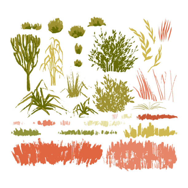 illustrations, cliparts, dessins animés et icônes de collection graphique de plantes colores abstraites sur fond blanc - prairie