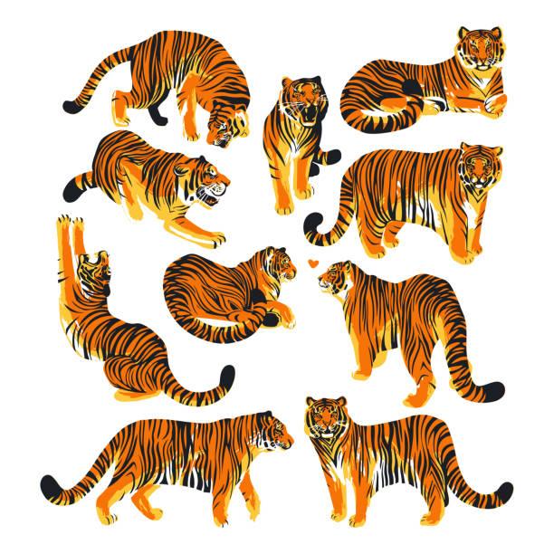 illustrations, cliparts, dessins animés et icônes de collection graphique des tigres dans des poses différentes. - tigre