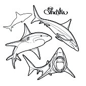 Graphic collection of vector sharks