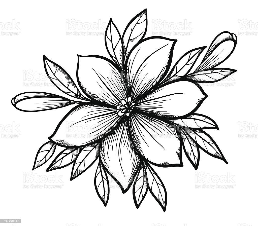 Cute Flower Line Drawing : Zeichnung lilie branch mit blätter und knospen der blumen