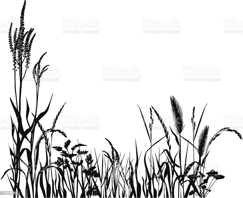 Graphic field royalty-free graphic field stock vector art & more images of agriculture