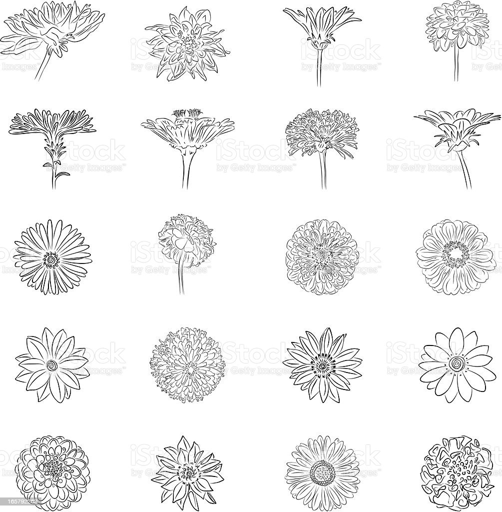 Graphic flowers vector art illustration