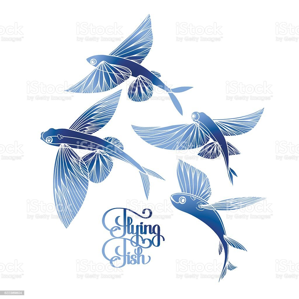 graphic flying fish collection stock vector art amp more