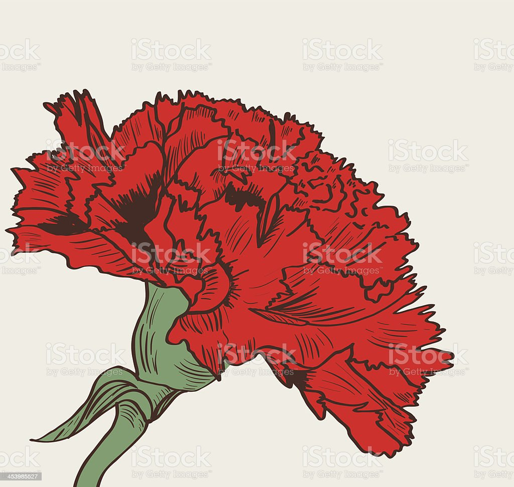 Graphic illustration of red carnation on white background
