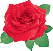 Graphic illustration of red rose against a white background