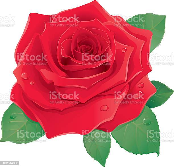 Graphic illustration of red rose against a white background vector id162844393?b=1&k=6&m=162844393&s=612x612&h=x3jhfvotssfkbteikio 4siskikf84r47vfs8mg05ry=