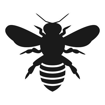 Graphic illustration of silhouette honey bee. Isolated on background vector