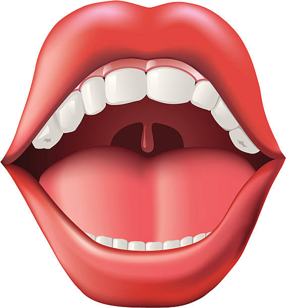 Graphic of an open mouth showing the tonsils vector art illustration