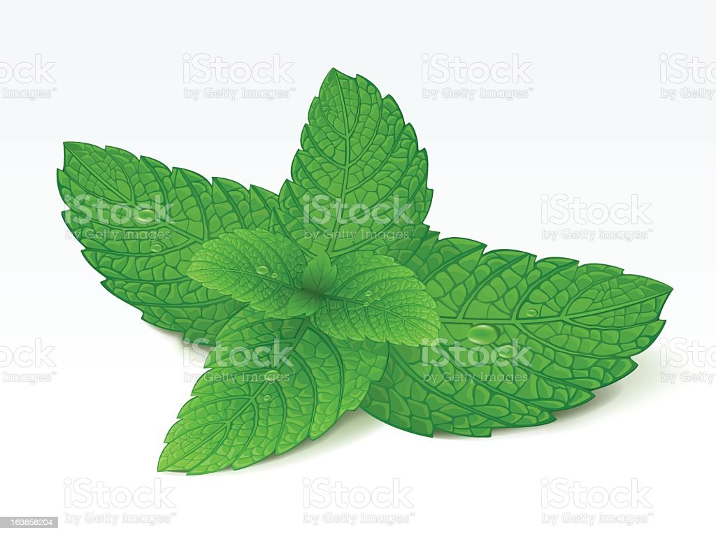 Graphic of mint leaves with water droplet, isolated on white vector art illustration