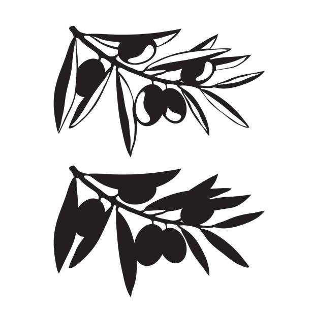Graphic olive tree branches vector art illustration