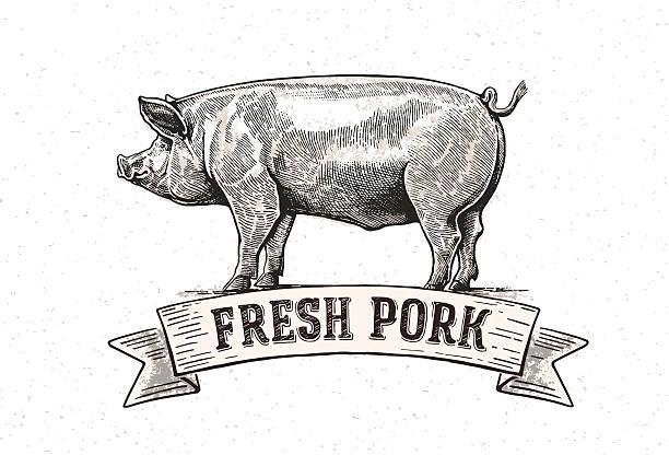 Graphic pig vector art illustration
