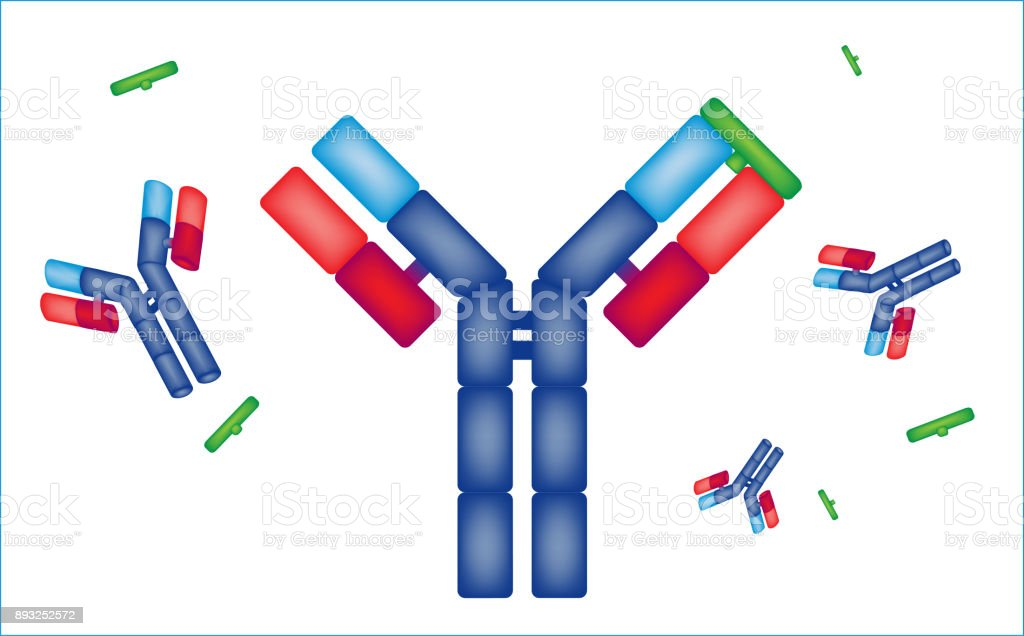 graphic representation of a drug, medical prescription antibody vector art illustration