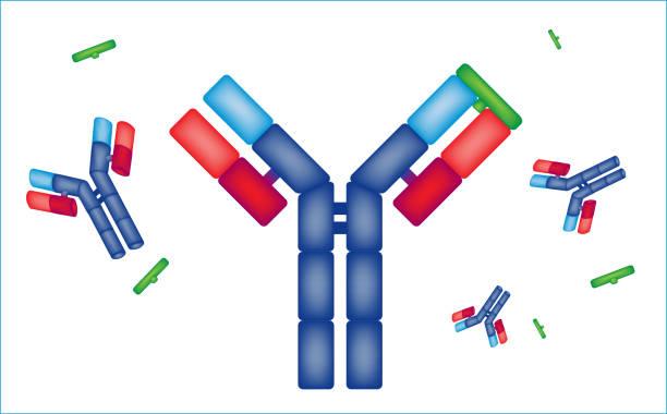 graphic representation of a drug, medical prescription antibody vector art illustration