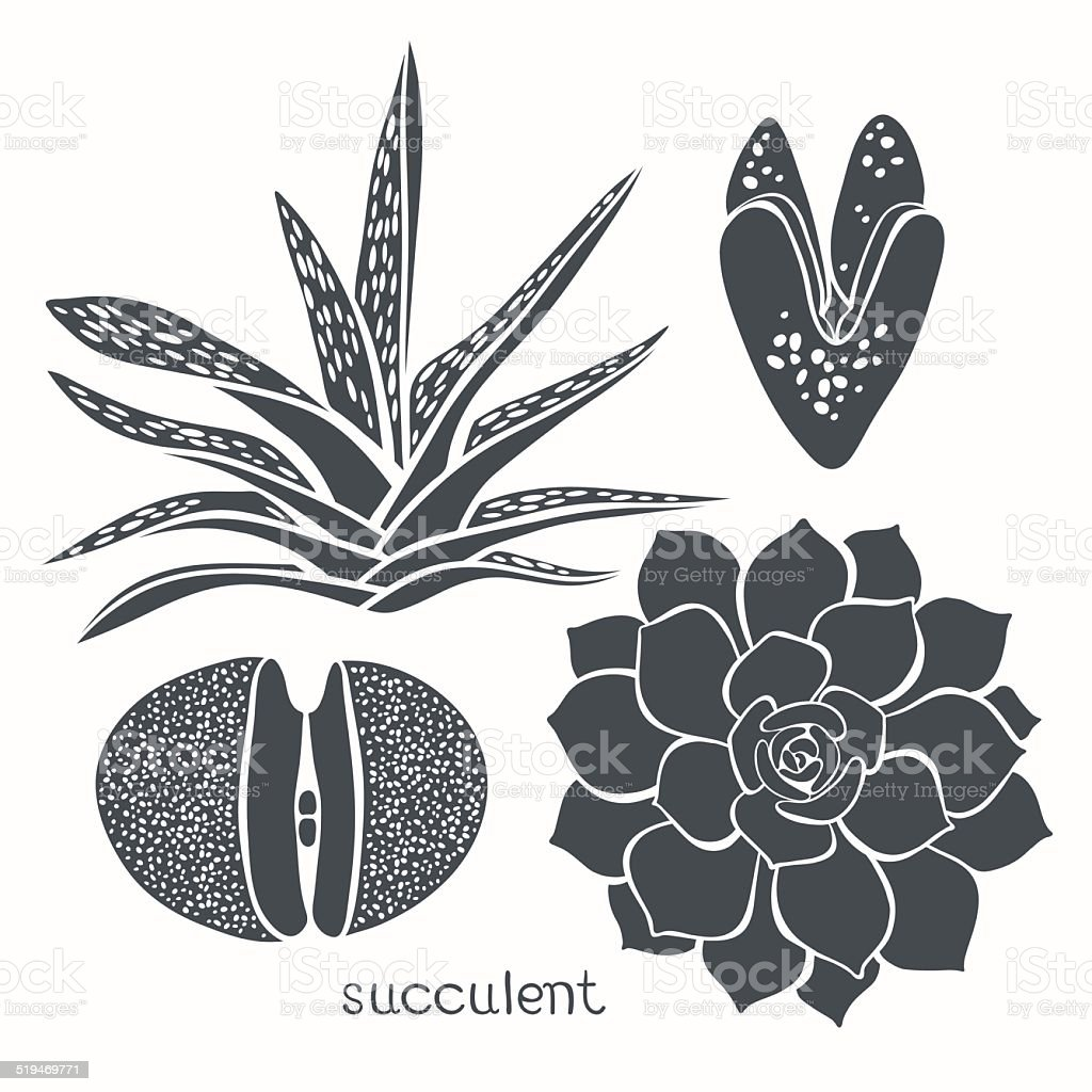 Graphic set with succulents  isolated on white background. vector art illustration