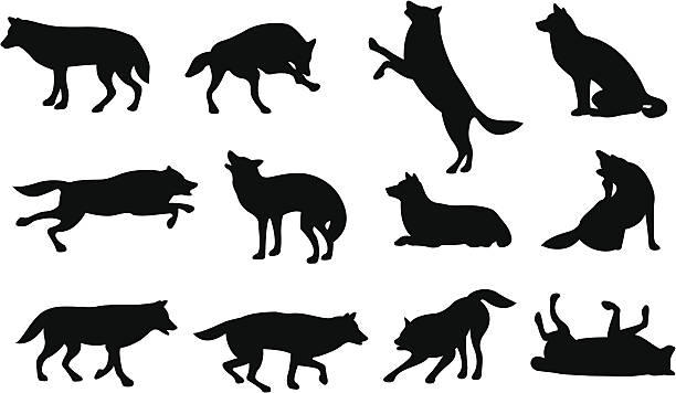 graphic silhouettes of wolves in different positions vector art illustration