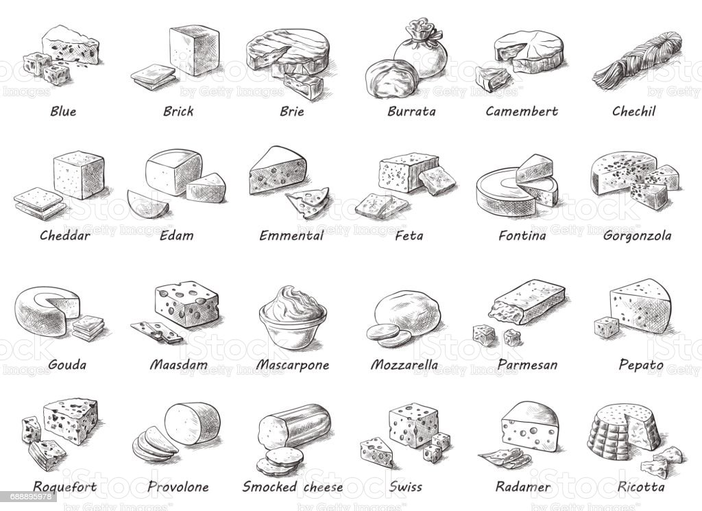 Graphic sketch of different cheeses. vector art illustration