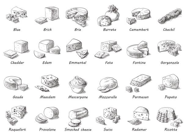 Graphic sketch of different cheeses. Graphic sketch of different cheeses. Vector set of realistic outline dairy products. Isolated curds collection used for design, recipe book, advertising cheese or restaurant menu. mozzarella stock illustrations