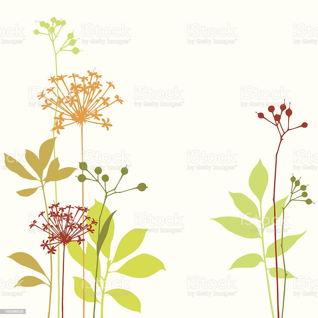 Graphic Stems Graphic illustration of modern groups of stems of leaves flowers and berries. All objects are separate and organized on clearly labeled layers. Global colors used and hi res jpeg included.Scroll down to see more of my illustrations. Autumn stock vector