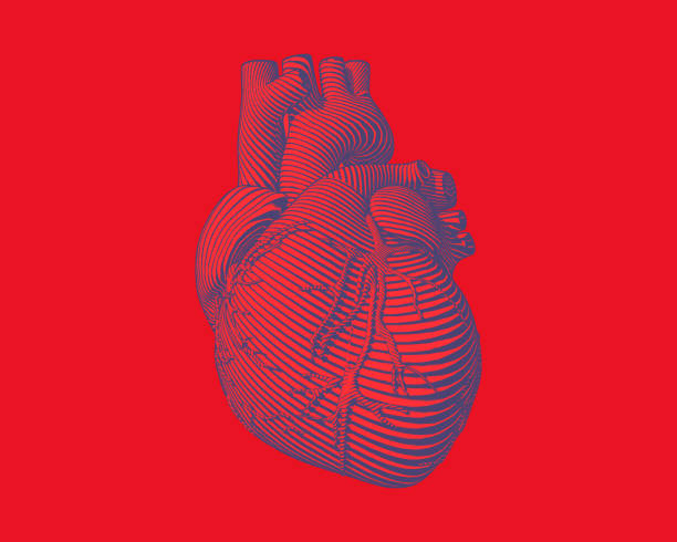 Graphic stylized human heart illustration Engraving blue human heart with flow line art stroke on red background biomedical illustration stock illustrations
