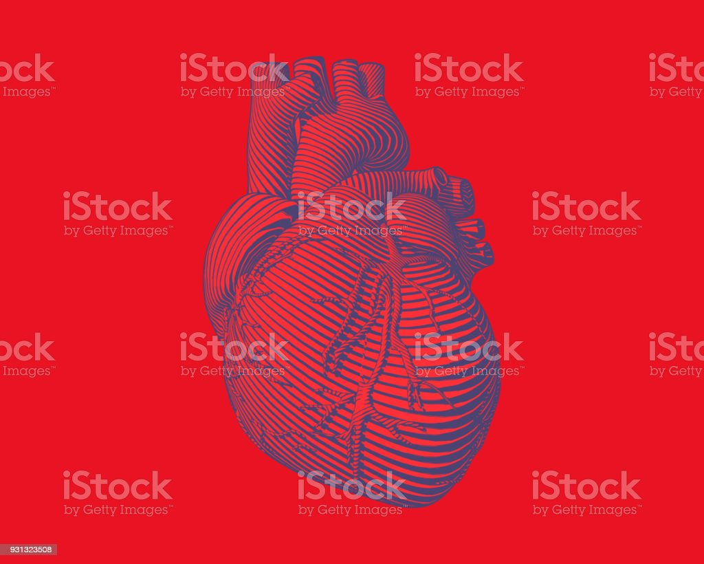 Graphic stylized human heart illustration - illustrazione arte vettoriale