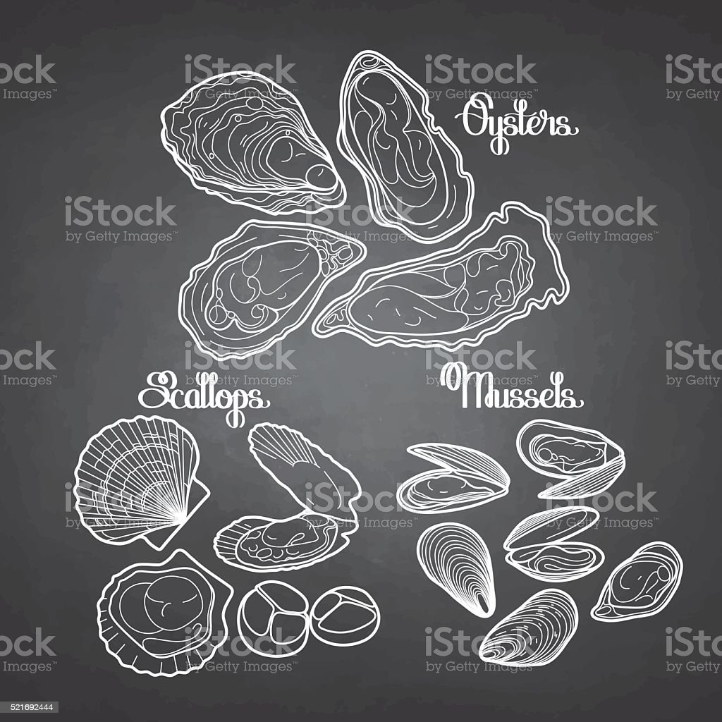 Graphic vector mussels, oysters and scallops vector art illustration