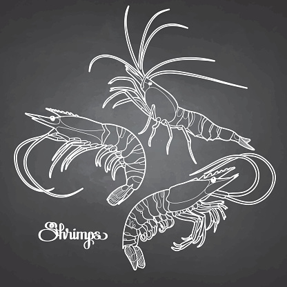 Graphic vector shrimps collection