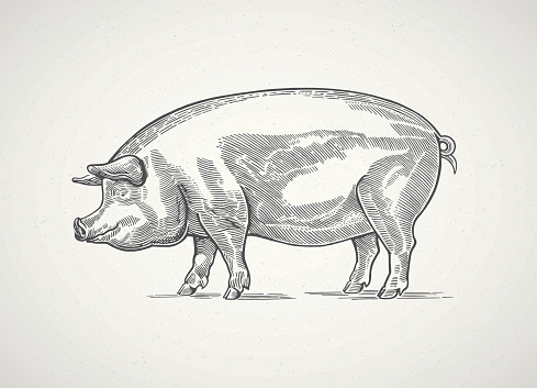Graphical pig.