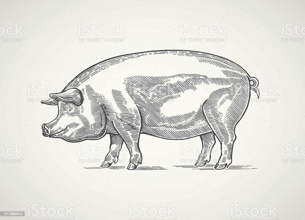 Graphical pig. vector art illustration