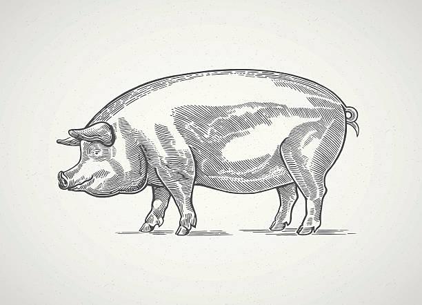 Graphical pig. vector art illustration