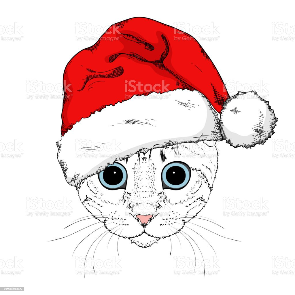Graphical portrait of cat in Santa Claus hat isolated on white background.  Cute cartoon cat with blue eyes for New Year and christmas design -  Illustration . f83997c97454