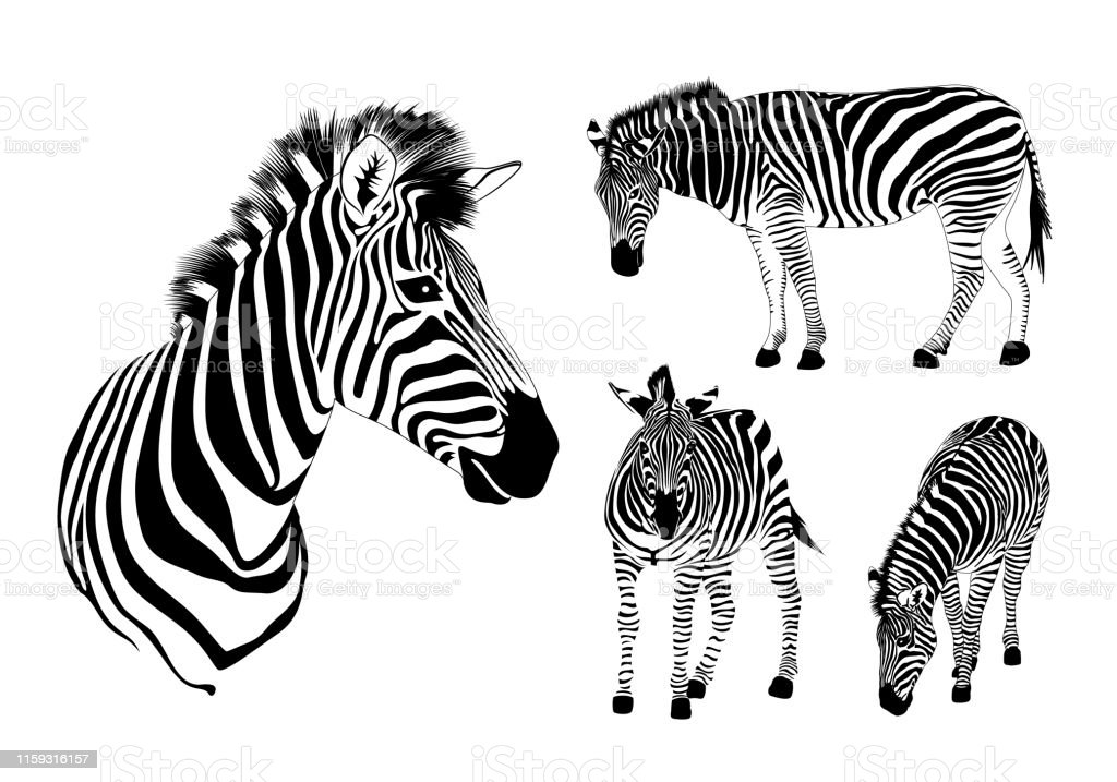 Striped black and white. Illustration isolated on white background.