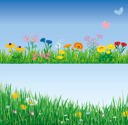 Gras with flowers border