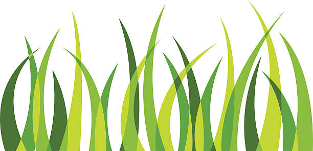 stockillustraties, clipart, cartoons en iconen met grass 4 - grasspriet